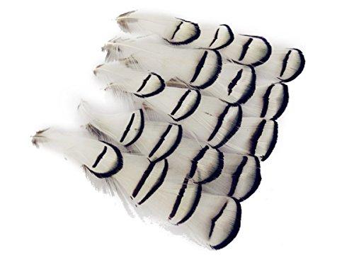 Butterme 50 Stk Natur Weiß Schwarz Fasanenfedern /Fasan Feder /Dekofedern / Schmuckfedern / Hutfedern 3-4 Zoll,für Kunsthandwerk DIY,Hüte,Basteln,Zuhause