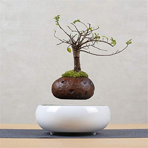 12V / 1.2A Magnetic Bloempotten Draaibaar Levitating Air Bonsai Pot Keramische Base Desktop Planters Modern, Suspension Pot Walnut