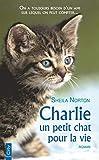 Charlie, un petit chat pour la vie