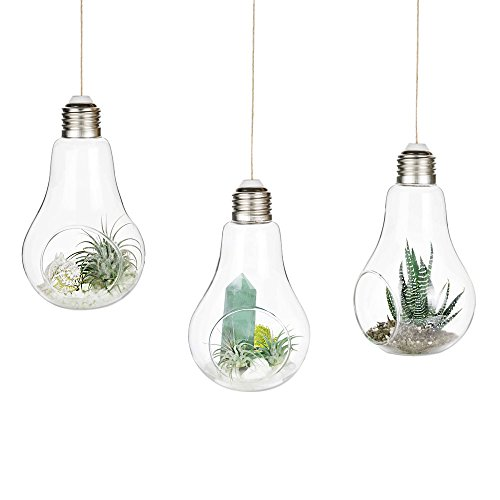 Mkono 3 Pack Light Bulb Terrariums with Strings Hanging Glass Vase Indoor Air Plant Holder Home...
