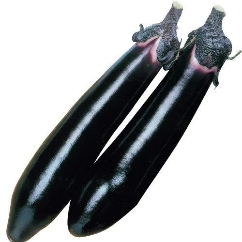 国華園 種 早得野菜たね ナス F1黒仙なす 1袋(2ml) /メール便配送