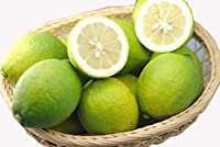 減農薬 愛媛産 レモン 10kg A品 国産 産地直送 ore