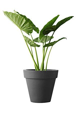 elho pure Round 60 Blumentopf – Rundes Pflanzengefäß in Anthrazit – Moderne Dekoration für Indoor & Outdoor – Ø 59,1 x H 53,6 cm