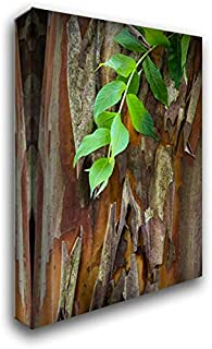 South Carolina, Charleston Crape Myrtle bark 28x40 Gallery Wrapped Stretched Canvas Art by Paulson, Don