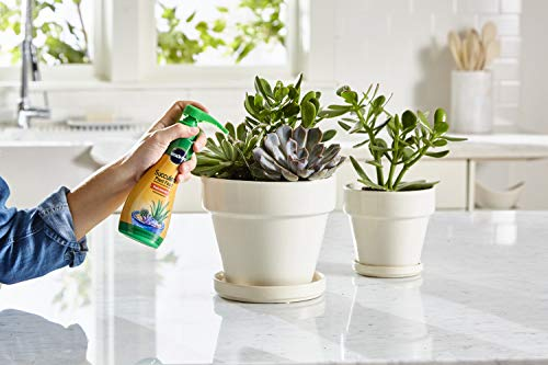 2. Miracle-Gro Succulent Plant Food