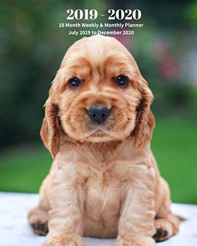 2019 - 2020 | 18 Month Weekly & Monthly Planner July 2019 to December 2020: English Cocker Spaniel Puppy Dog Breed Pets Vol 27 Monthly Calendar with ... Holidays– Calendar in Review/Notes 8 x 10 in.