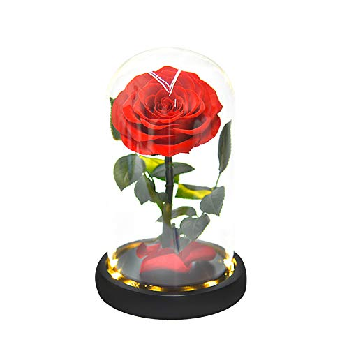 ThreeH Real Rose in Glass Dome Rose eterna Flor preservada Regalo para su día de San Valentín Cumpleaños Día de la Madre Navidad Acción de Gracias Rojo