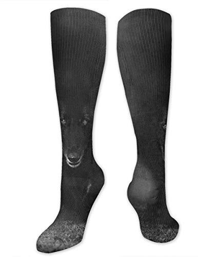 Calcetines de poliéster casuales para perros pastores belgas caminando a través de la niebla de la sombra del lobo de 3.35 x 19.68 pulgadas para el niño adecuado para el hogar