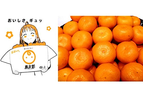 JA静岡経済連 【今シーズン完売】静岡 寿太郎みかん 秀品(青秀)M 約10kg