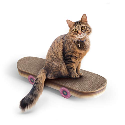 41VVVM1fAKL. SL500  - Votre Chat va Adorer le Skateboard Griffoir pour Faire ses Griffes - Environnement, Chats, Animaux, Amazon, Accessoires