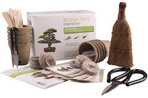 KIT BONSAI ¡CULTIVA TUS PROPIOS ÁRBOLES Kit de germinación bonsais SET REGALO DE JARDINERÍA Con 3 Herramientas superiores, set de regalo de primera calidad, paquete de gran valor,idea única de regalo