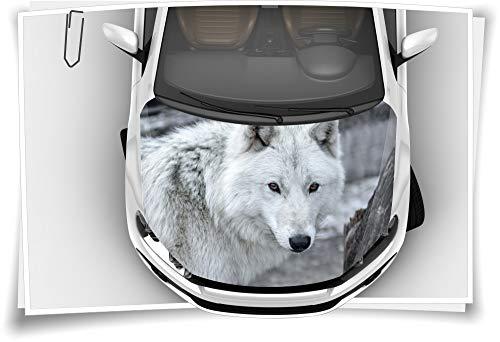 Medianlux Motorhaube Auto-Aufkleber Wolf Wild Raub-Tier Weiß Grau Steinschlag-Schutz-Folie Airbrush Tuning