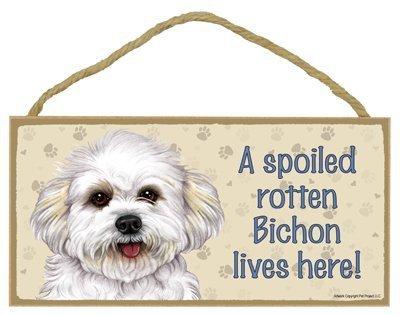 Bichon Frise (puppy cut / short hair cut) - A spoiled \