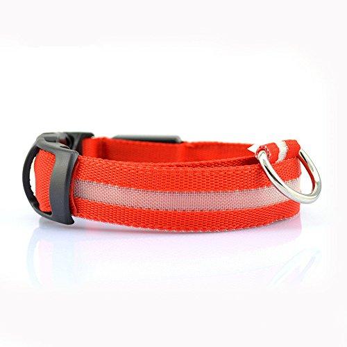 Winnes LED Hundehalsband mit USB Wiederaufladbar Blinkender LED Hunde Sicherheits Halsband Nacht Hundeband für Hunde, Haustier (S 2.5cm X (35cm-43cm), Rot)