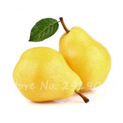 5 Pcs chinois poire Graines de sable blanc poire juteuse charnues fruits doux et délicieux vert sain nourriture savoureuse Bonne jardin des plantes 5