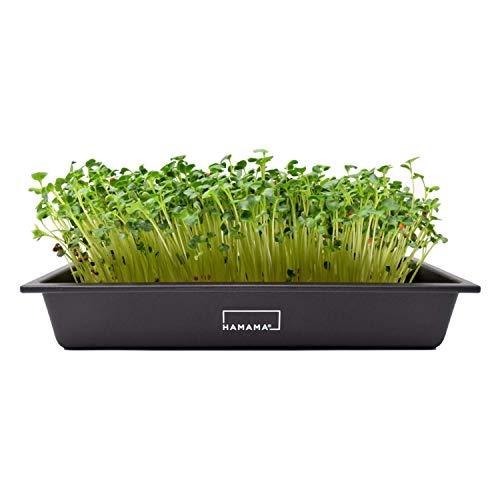 Hamama microgreen growing kit
