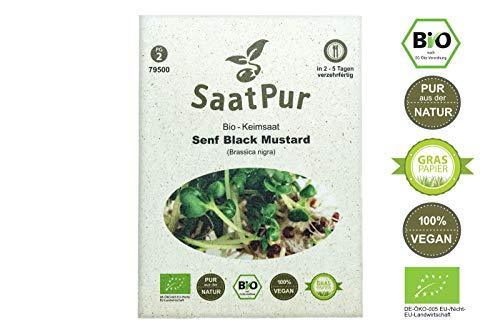 SaatPur Bio Keimsprossen - Senf Black Mustard - schwarzer Senf Sprossen, Microgreens - 30g