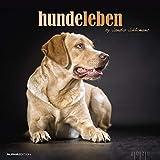 Hundeleben 2020 - Hunde - Dogs - Bildkalender (33 x 33) - Tierkalender - mit Zitaten - Wandkalender