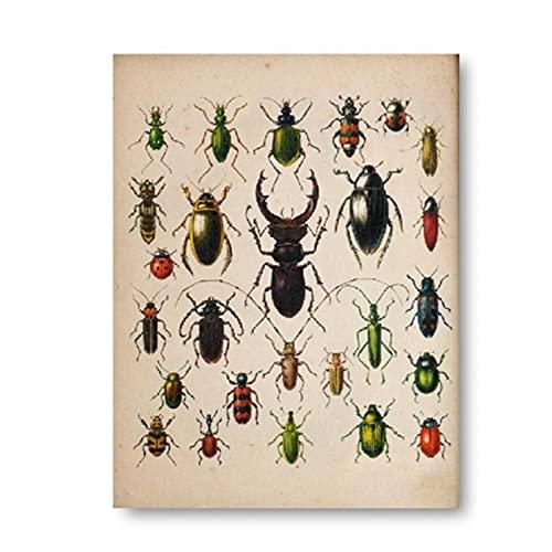 FUXUERUI Colección de escarabajos Vintage insecto ilustración antigua cuadro de arte de pared lienzo pintura cartel impreso para decoración del hogar,40x60cm sin marco