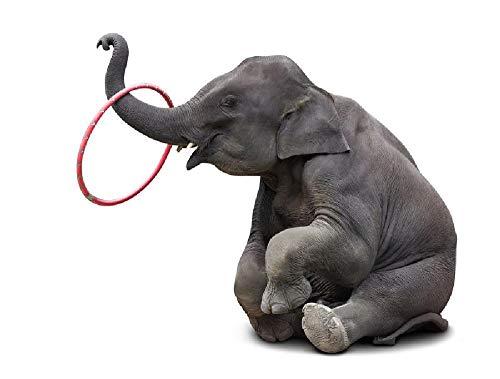 Rompecabezas de 1500 Piezas, Rompecabezas de madera, Juego de Rompecabezas de relajación, Rompecabezas para el Cerebro, Regalo para niños y Adultos (87x57cm) Elefante jugando con hula hoop