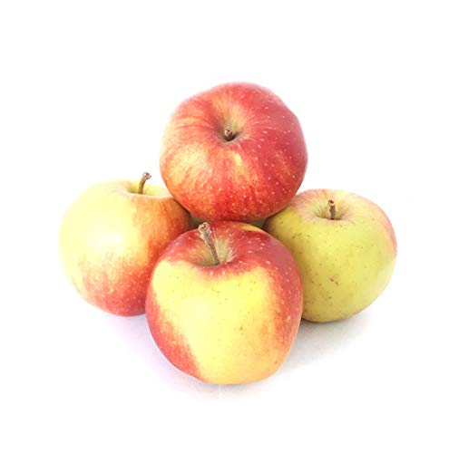 Äpfel Jonagold aus Deutschland/Bodensee süß-säuerlicher Apfel Speiseapfel 1-10 KG (5)