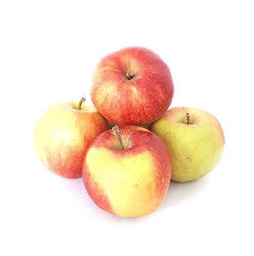 Äpfel Jonagold aus Deutschland/Bodensee süß-säuerlicher Apfel Speiseapfel 1-10 KG (2)