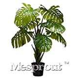 . 100% d'origine Rare 100pcs Mix philodendron, Feuille de Vigne, Plantes d'intérieur Anti rayonnement Absorber poussière Arbre Plante: 7