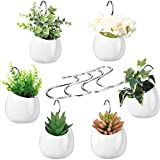 6 Macetas de Plantas de Pared de Colgante Jardinera Redonda de Cerámica Montada en Pared Florero Decorativo de Exhibición de Flores con 6 Ganchos para Planta Suculenta o Planta de Aire
