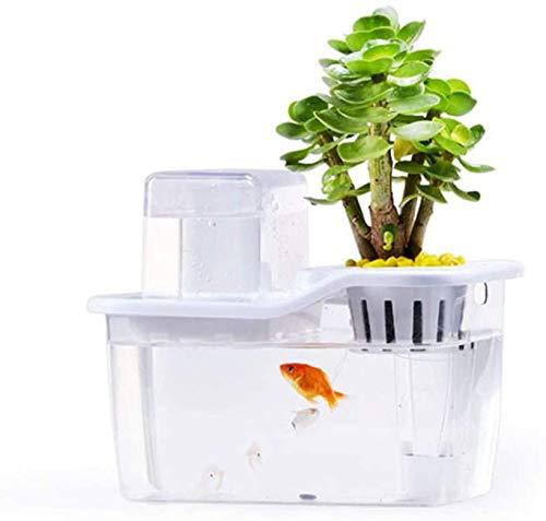 Aquarium, Aquarium starter met organische spruiten en kruiden Aquarium Kit vakantie cadeau voor vader echtgenoot