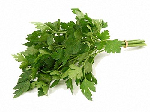 100CT de persil graines, feuilles géant plat italien, Heirloom herbes, épices ogm
