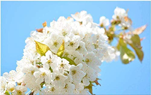 Puzzles 1000 Pieces Family Cardboard Puzzles Pear Blossoms On The Branch...