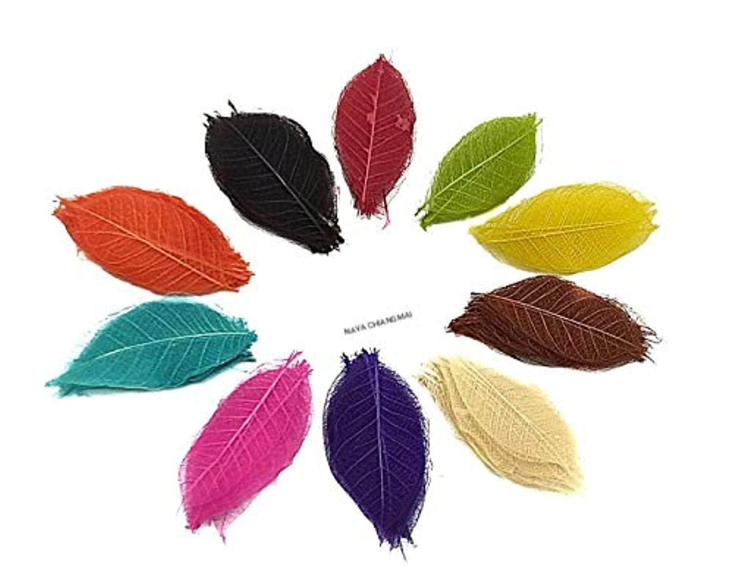 NAVA CHIANGMAI Rubber Tree Leaves - Pack of 100 Skeleton Leaves Decorative DIY Craft, Artificial Leaves Craft Card Scrapbook DIY Handmade Embellishment Decoration Art (Mixed Color)
