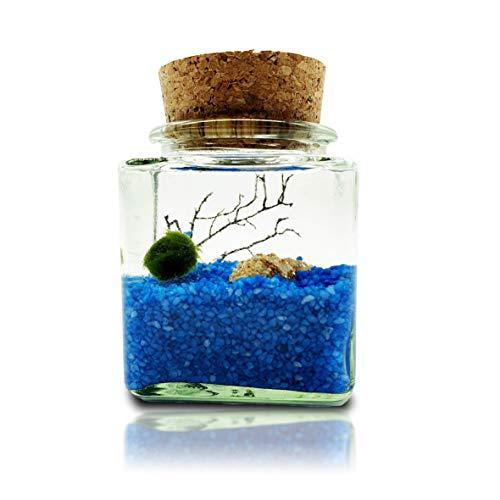 Nano Marimo Mooskugeln Glas Aquarium Set Zierpflanze für Aquarien Aegagrophila linnaei Wasserpflanze Geschenk Set