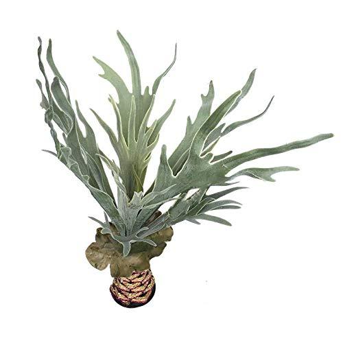 Yw-Flower Realistische Kunstmatige Succulente Planten, Kas Kleine Planten Ongeplant, Thuis Tuin Office Decoratie,2 Stks (Groen)