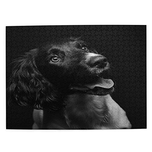 Jigsaw Puzzles for Adults 500 Piece Times Square Intelligence Decompression Fun Game,Working English Springer Spaniel Puppy Six Month Old Studio Shot Black,The Completed Puzzle Size 20.5'x15.1'