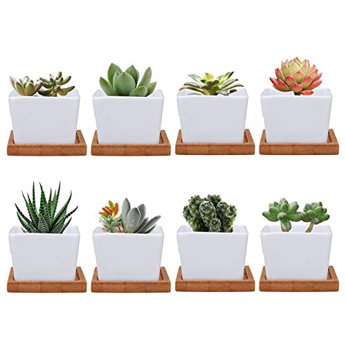 Brajttt Succulent Pots, Mini Ceramic Flower Pots Plant Pot with Bamboo Tray, Cactus Planters with Hole and Drinage(8 Pack…