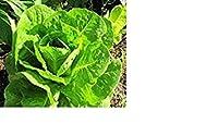レタス、パリ島Cos Romaine家宝の新鮮な手包装種子(270+新鮮な手包装種子)