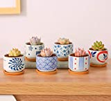 JKMQA 6 cm Pentola succulenta in Stile Giapponese Base Set Succulente Vaso per Piante Cactus Vaso per Fiori Vaso per Fiori Fioriera Contenitore Bonsai Vasi con Un Buco Perfetto Idea Regalo 6 in Set