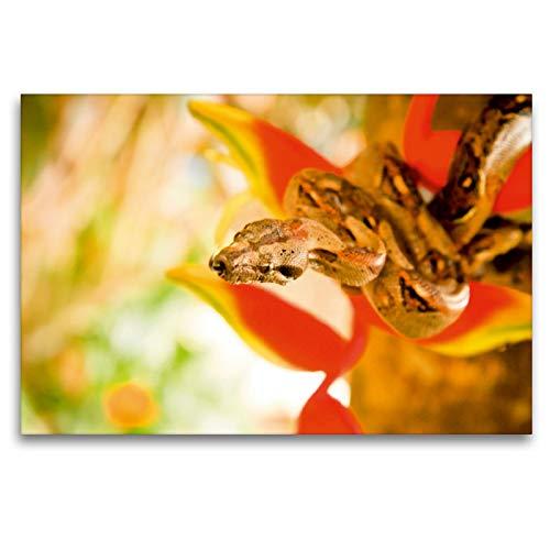 Premium textiel canvas 120 cm x 80 cm dwars, Boa Constrictor slang een tak met rode bloemen | muurschildering, afbeelding op spieraam. Boa Constrictor, Costa Rica (CALVENDO dieren);Calvendo dieren