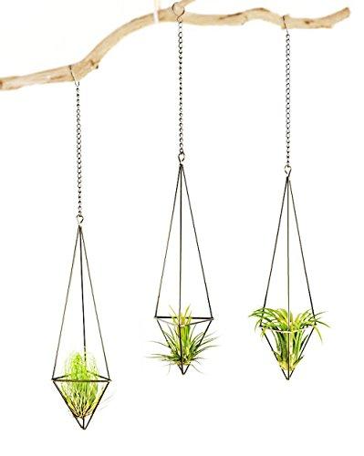 Mkouo 3 Stück Luftpflanzen Hängenden Metall Tillandsien Luftpflanzen Halter Topf Container Dekoration - Bronze(Pflanzen Nicht enthalten)