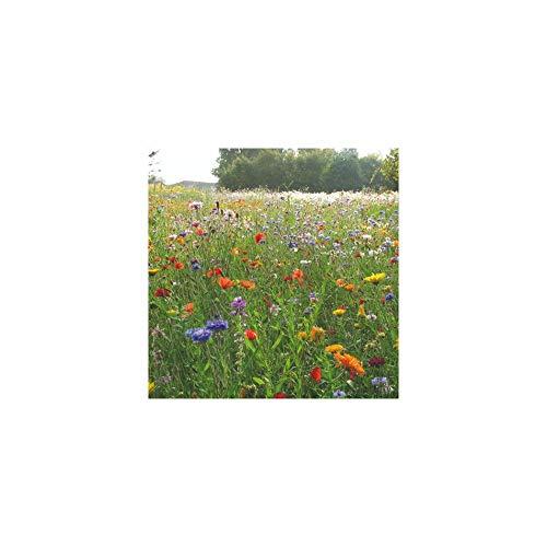 Les Gazons de France Mélange Prairie Fleurie Champetre