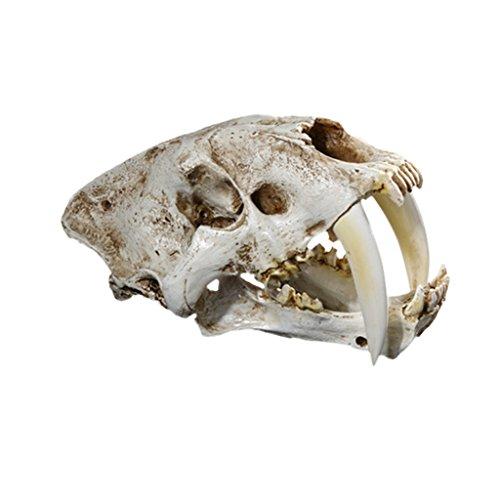 LOVIVER Resina Smilodon Sable Diente Cráneo De Tigre Réplica Sabertooth Cráneo Animal Cráneo Especímenes Inicio Bar Estatua Decoración