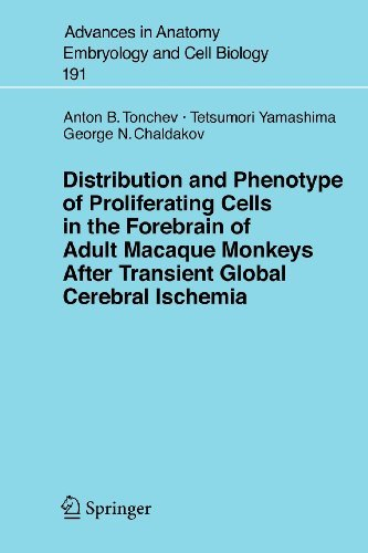 Distribution and Phenotype of Proliferating Cells in the Forebrain of Adult Macaque Monkeys after Tr
