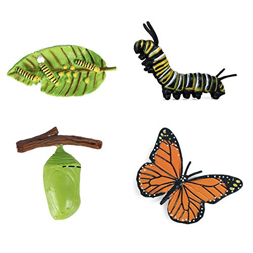 ISAKEN Juguete de Figuras de Animales de Ciclo de Vida, Ciclo de Vida para Rana, la mariposa, Tortuga Marina, Pollo, Modelo de Animal de Simulación Juguetes Educativos para Niños