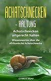 *Achatschnecken - Haltung: Achatschnecken artgerecht halten | Wissenswertes über die Afrikanische Achatschnecke
