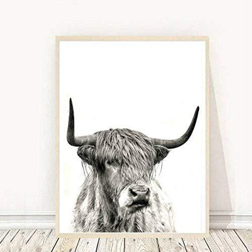 Geiqianjiumai Hochlandkuh Leinwand Kunstdruck und Poster Nutztier Hochlandbulle Fotografie Leinwandbild Rahmenlose Malerei 50x70cm
