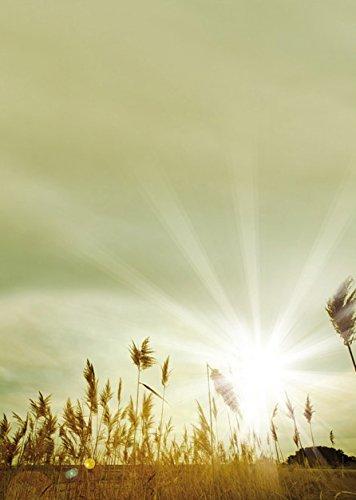 Herbst Sonne Natur Motivpapier Herbstgräser, 50 Blatt Briefpapier DIN A4, 90g/qm