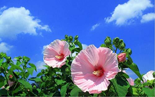 Nieuwe oogverzorging hibiscusschilderij op nummer DIY uniek