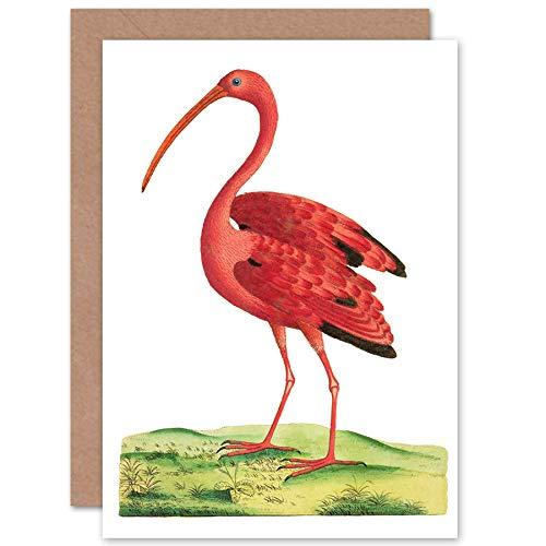 Fine Art Prints Vogel Scarlet Ibis wenskaart met envelop binnen Premium kwaliteit
