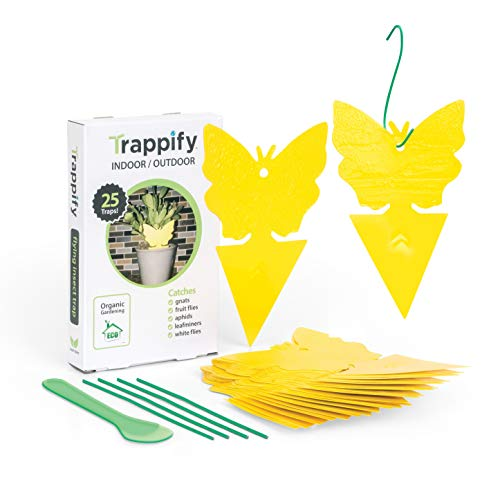Trappify Sticky Fruit Fly and Gnat Trap Yellow Sticky Bug Traps for Indoor/Outdoor Use - Insect Catcher for White Flies, Mosquitos, Fungus Gnats, Flying Insects - Disposable Glue Trappers (25)